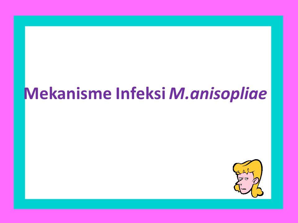 Mekanisme Infeksi M.anisopliae