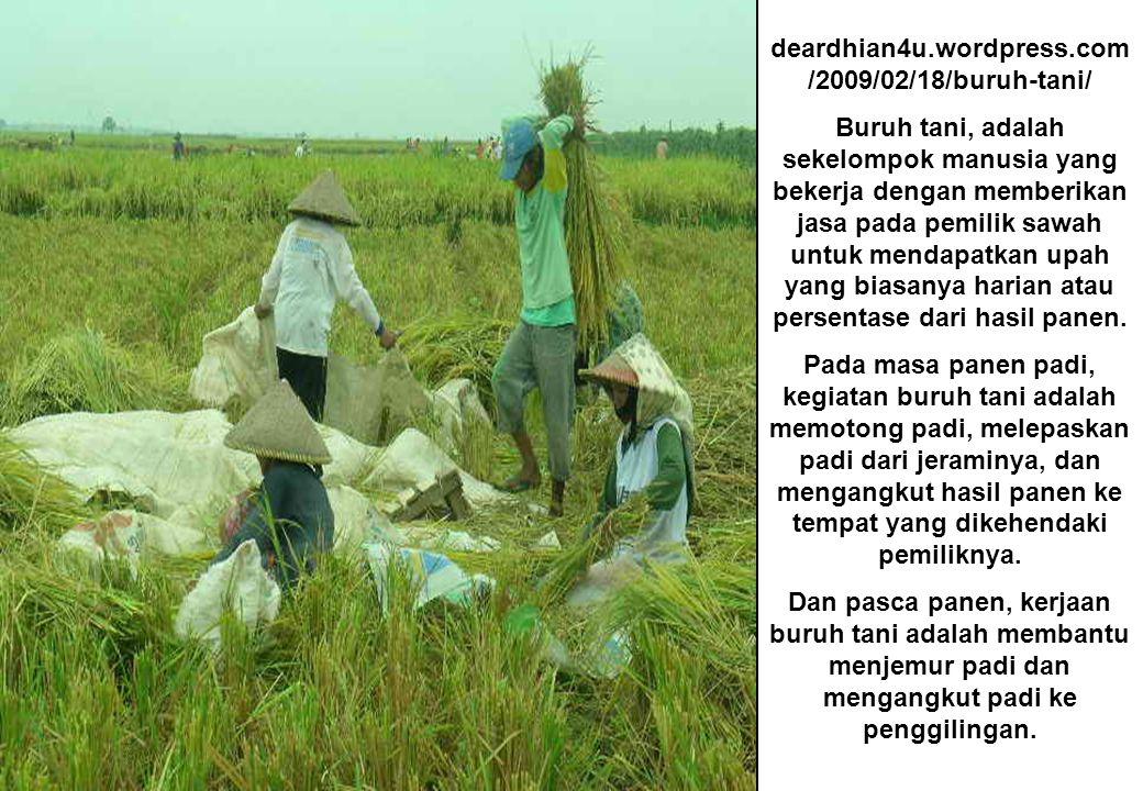 deardhian4u.wordpress.com /2009/02/18/buruh-tani/ Buruh tani, adalah sekelompok manusia yang bekerja dengan memberikan jasa pada pemilik sawah untuk mendapatkan upah yang biasanya harian atau persentase dari hasil panen.