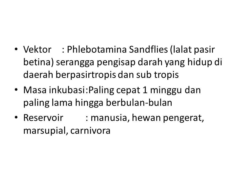 Vektor : Phlebotamina Sandflies (lalat pasir betina) serangga pengisap darah yang hidup di daerah berpasirtropis dan sub tropis Masa inkubasi:Paling c