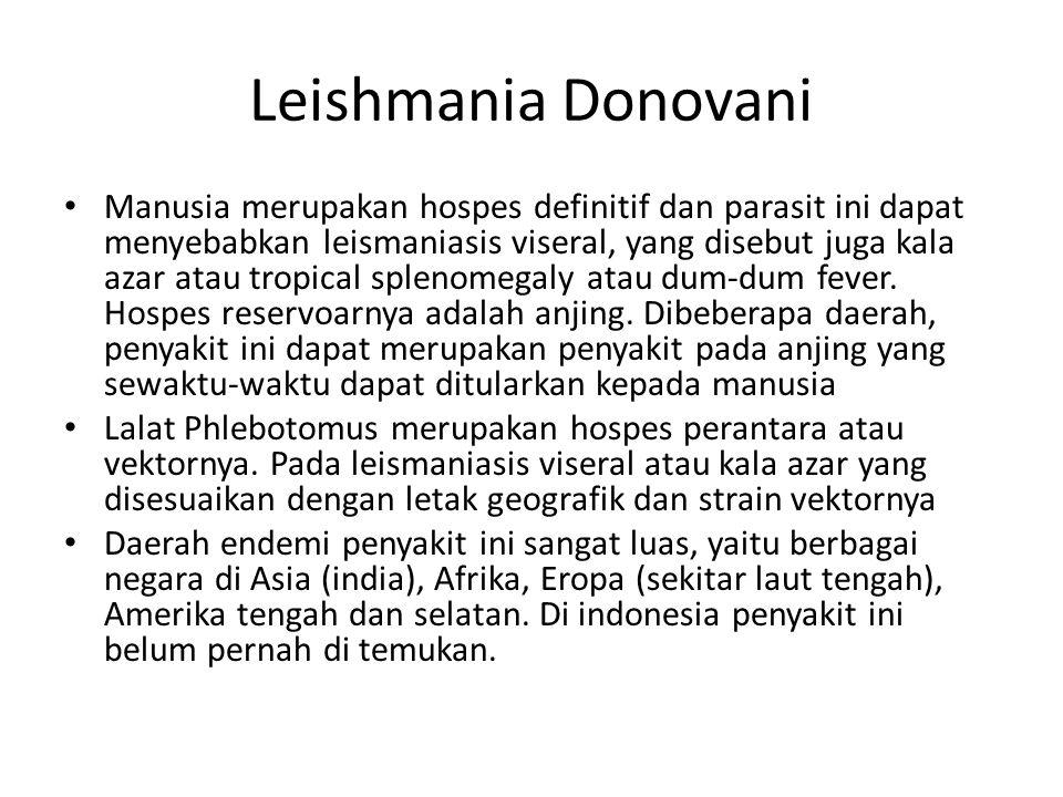 Leishmania Donovani Manusia merupakan hospes definitif dan parasit ini dapat menyebabkan leismaniasis viseral, yang disebut juga kala azar atau tropic