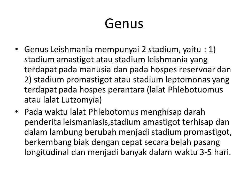 Genus Genus Leishmania mempunyai 2 stadium, yaitu : 1) stadium amastigot atau stadium leishmania yang terdapat pada manusia dan pada hospes reservoar