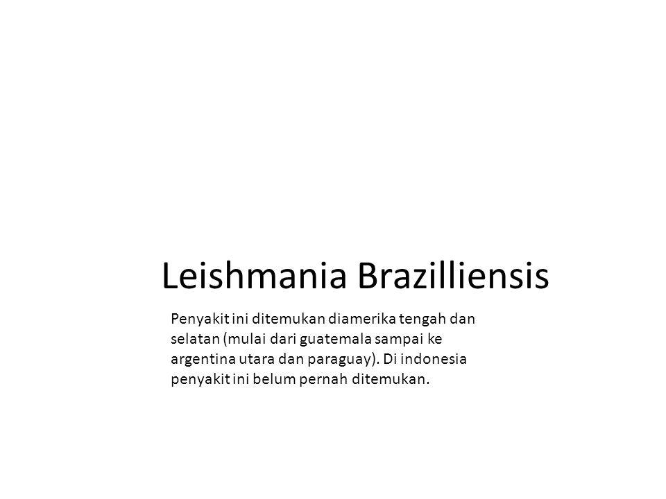 Leishmania Brazilliensis Penyakit ini ditemukan diamerika tengah dan selatan (mulai dari guatemala sampai ke argentina utara dan paraguay). Di indones