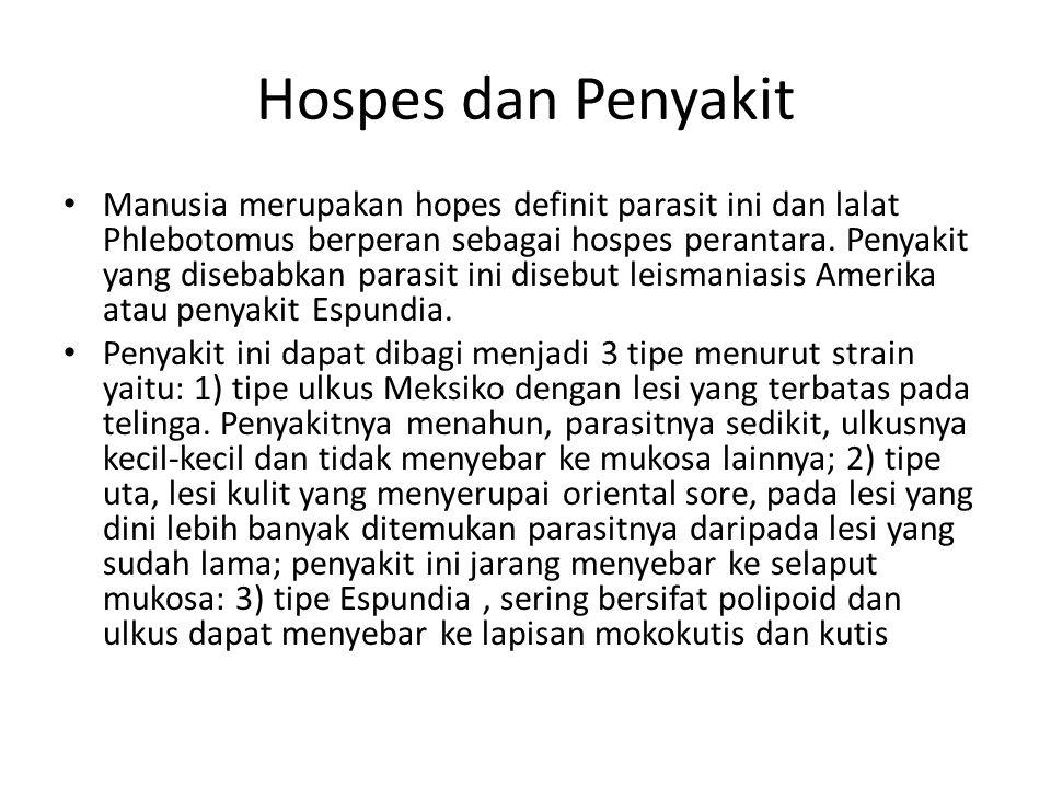 Hospes dan Penyakit Manusia merupakan hopes definit parasit ini dan lalat Phlebotomus berperan sebagai hospes perantara. Penyakit yang disebabkan para
