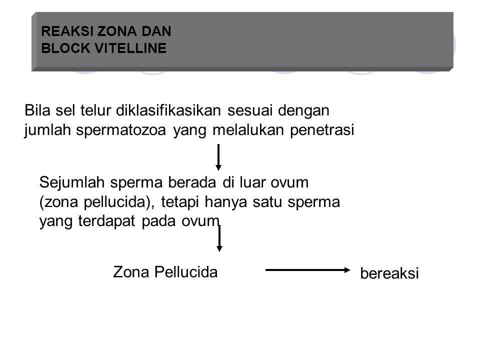 REAKSI ZONA DAN BLOCK VITELLINE Bila sel telur diklasifikasikan sesuai dengan jumlah spermatozoa yang melalukan penetrasi Sejumlah sperma berada di lu