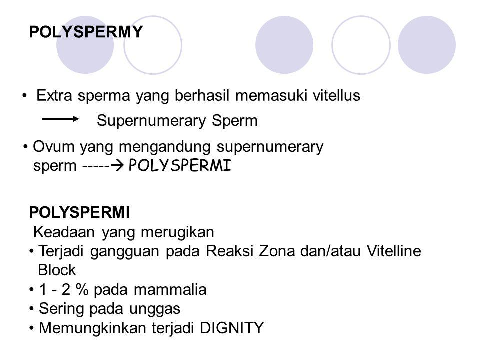 POLYSPERMY Extra sperma yang berhasil memasuki vitellus Supernumerary Sperm Ovum yang mengandung supernumerary sperm -----  POLYSPERMI POLYSPERMI Kea