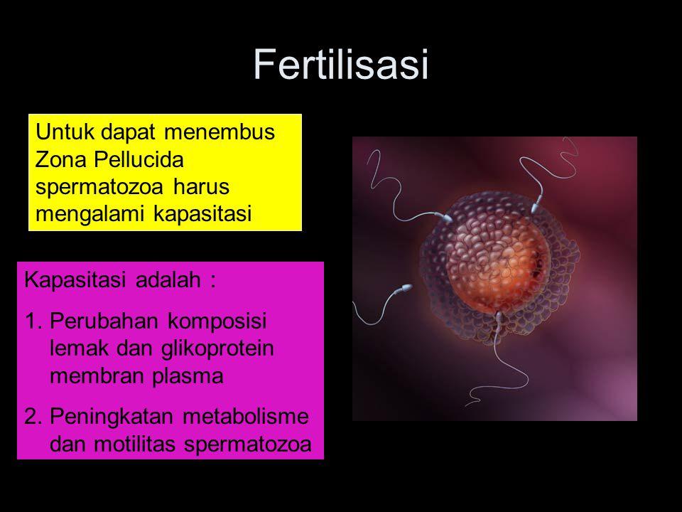 Fertilisasi Untuk dapat menembus Zona Pellucida spermatozoa harus mengalami kapasitasi Kapasitasi adalah : 1.Perubahan komposisi lemak dan glikoprotei
