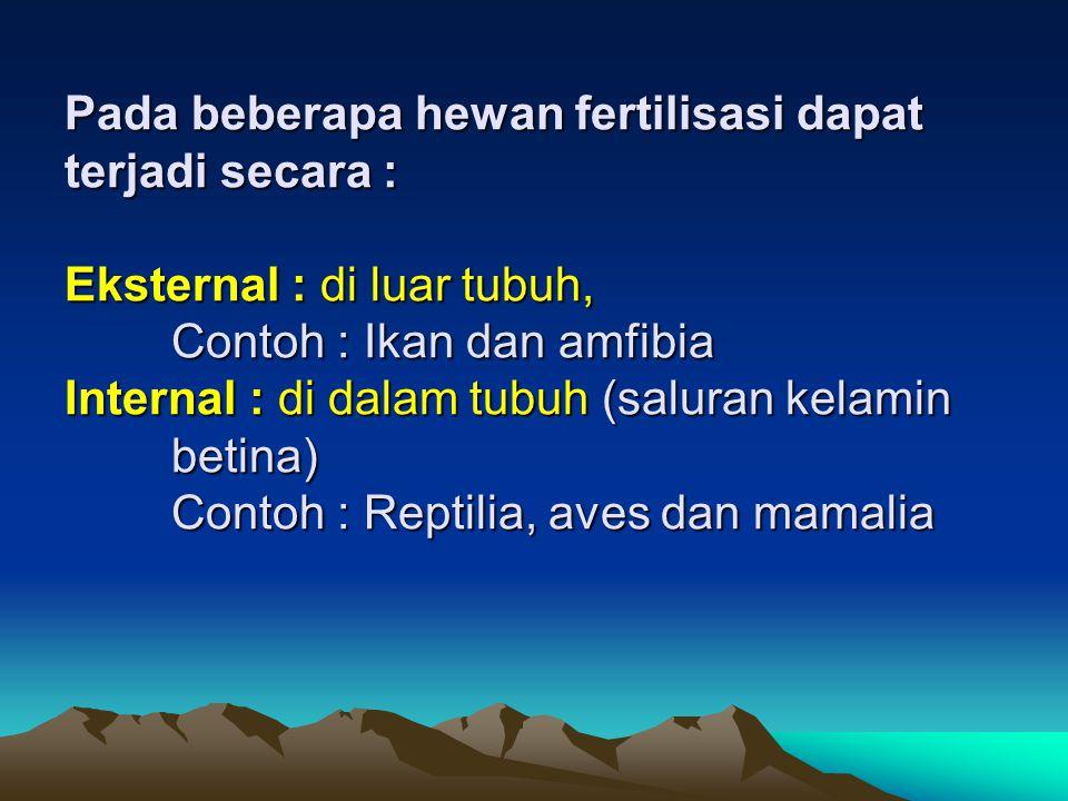 Pada beberapa hewan fertilisasi dapat terjadi secara : Eksternal : di luar tubuh, Contoh : Ikan dan amfibia Internal : di dalam tubuh (saluran kelamin