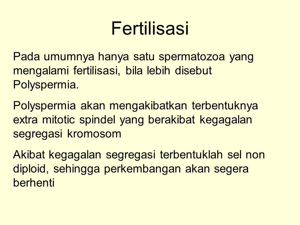 Fertilisasi Pada umumnya hanya satu spermatozoa yang mengalami fertilisasi, bila lebih disebut Polyspermia. Polyspermia akan mengakibatkan terbentukny