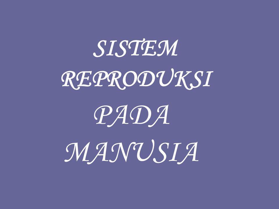 FASE MENSTRUASI : FASE MENSTRUASI : bila tidak terjadi fertilisasi (ovum tidak dibuahi oleh sperma ), korpus luteum akan mengkerut menjadi korpus albicans sehingga produksi hormon estrogen dan progesteron terhenti.