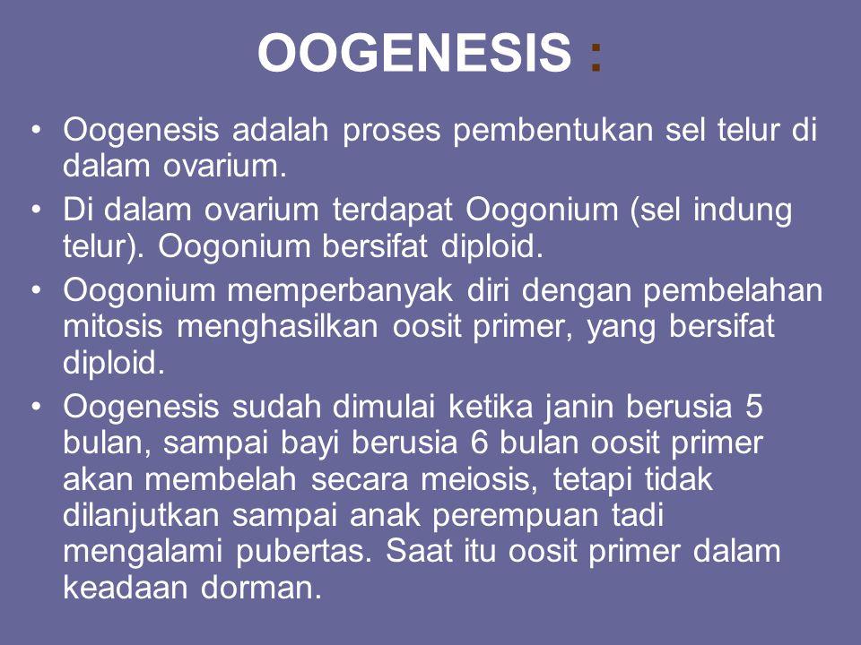 OOGENESIS : Oogenesis adalah proses pembentukan sel telur di dalam ovarium. Di dalam ovarium terdapat Oogonium (sel indung telur). Oogonium bersifat d
