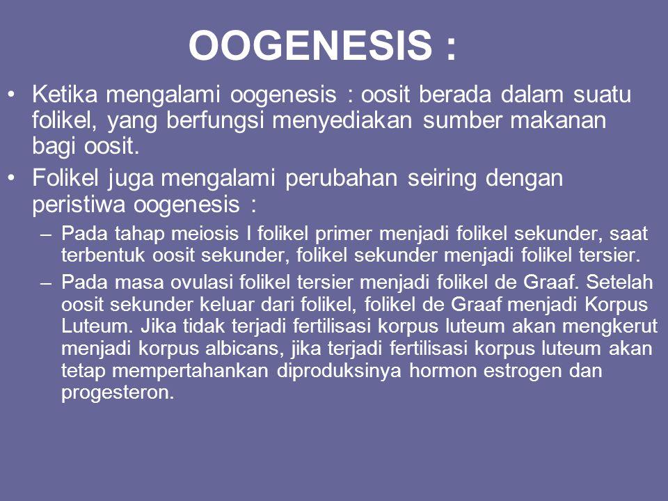 OOGENESIS : Ketika mengalami oogenesis : oosit berada dalam suatu folikel, yang berfungsi menyediakan sumber makanan bagi oosit. Folikel juga mengalam