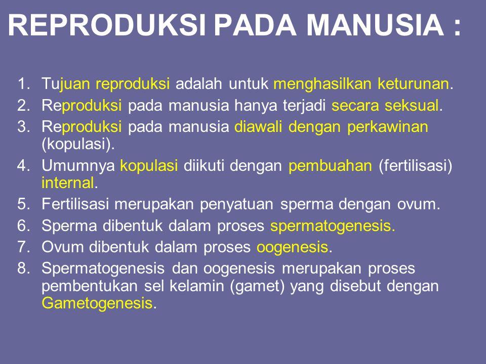 REPRODUKSI PADA MANUSIA : 1.Tujuan reproduksi adalah untuk menghasilkan keturunan. 2.Reproduksi pada manusia hanya terjadi secara seksual. 3.Reproduks