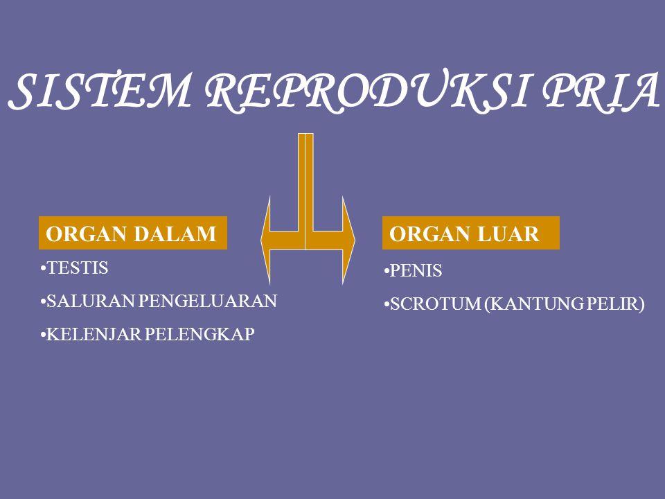 SPERMATOGENESIS : Terjadi pada di dalam testis tepatnya di tubulus seminiferus.dalam testis tepatnya di tubulus seminiferus.