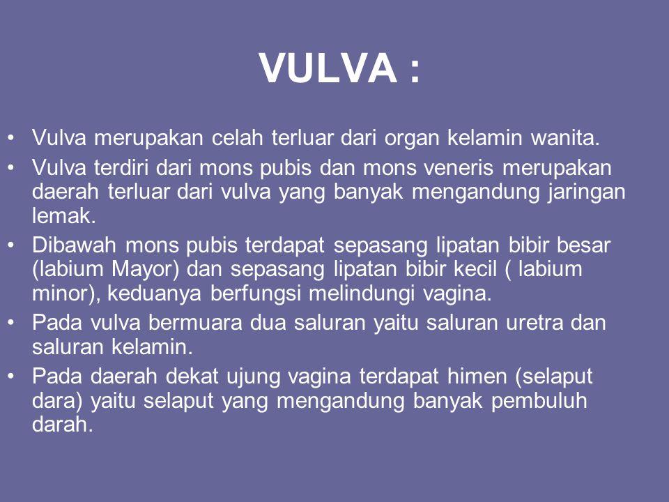 VULVA : Vulva merupakan celah terluar dari organ kelamin wanita. Vulva terdiri dari mons pubis dan mons veneris merupakan daerah terluar dari vulva ya