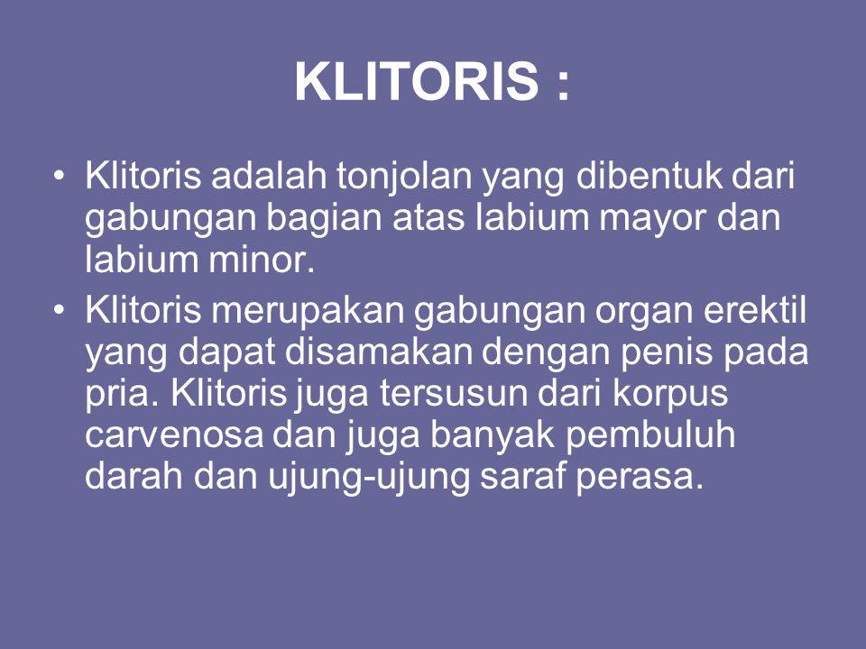 KLITORIS : Klitoris adalah tonjolan yang dibentuk dari gabungan bagian atas labium mayor dan labium minor. Klitoris merupakan gabungan organ erektil y