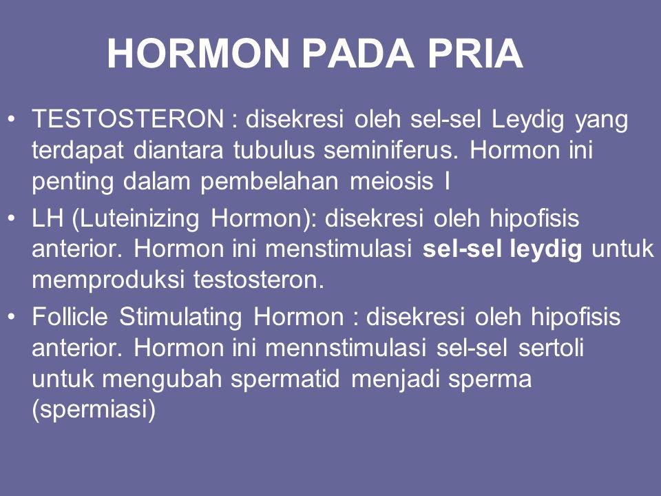 HORMON PADA PRIA TESTOSTERON : disekresi oleh sel-sel Leydig yang terdapat diantara tubulus seminiferus. Hormon ini penting dalam pembelahan meiosis I