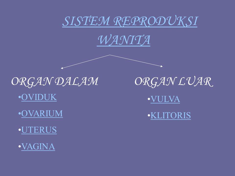 OVARIUM (INDUNG TELUR) Adalah kelenjar kelamin wanita yang berfungsi menghasilkan ovum, hormon estrogen, dan hormon progesteron.