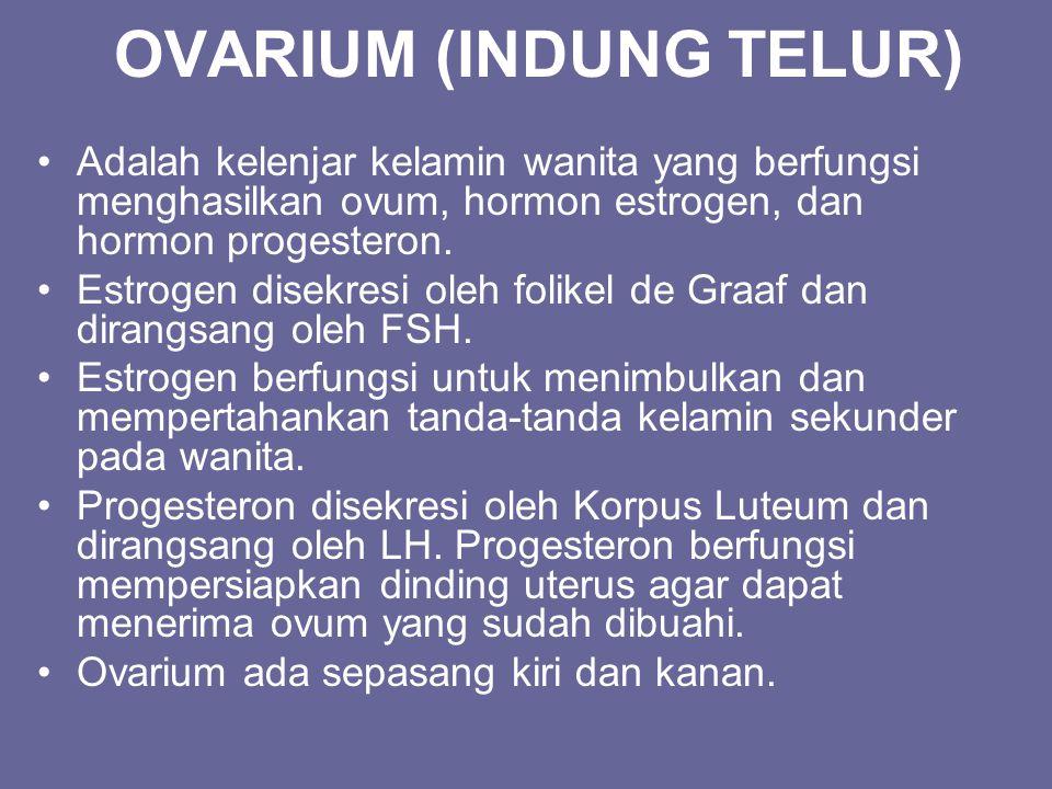 OVARIUM (INDUNG TELUR) Adalah kelenjar kelamin wanita yang berfungsi menghasilkan ovum, hormon estrogen, dan hormon progesteron. Estrogen disekresi ol