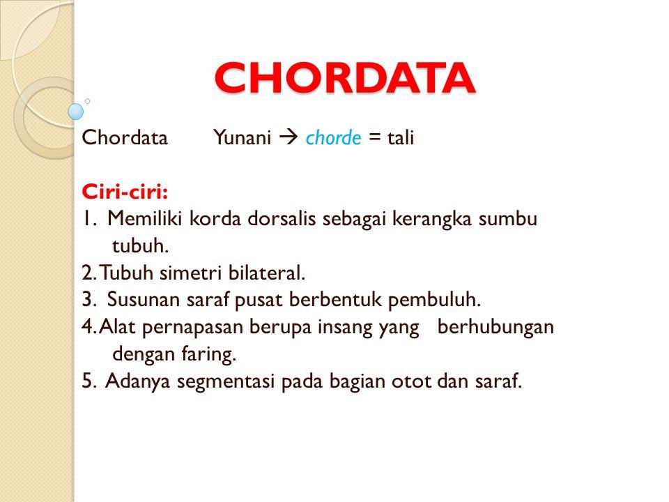 Chordata dibedakan menjadi empat subfilum, yaitu : Hemichordata, Urochordata, Cephalochordata, dan Vertebrata.