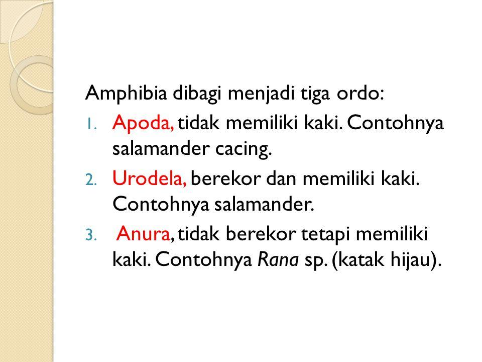 Amphibia dibagi menjadi tiga ordo: 1.Apoda, tidak memiliki kaki.