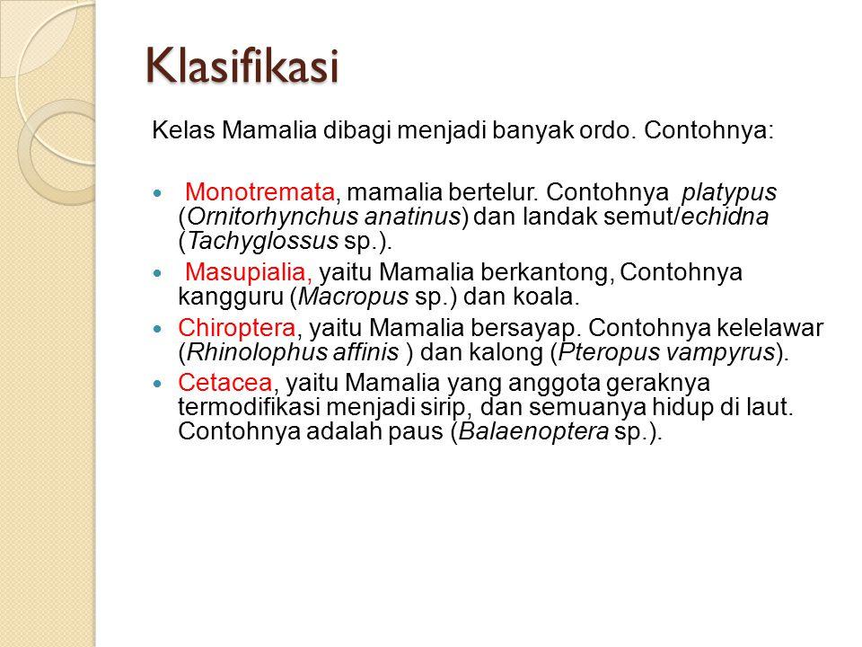 Klasifikasi Kelas Mamalia dibagi menjadi banyak ordo.