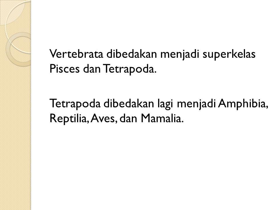 Vertebrata dibedakan menjadi superkelas Pisces dan Tetrapoda.