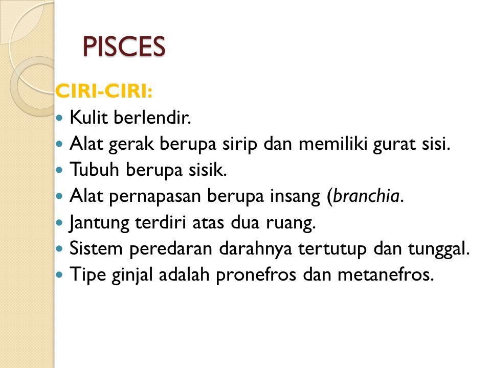 PISCES CIRI-CIRI: Kulit berlendir.Alat gerak berupa sirip dan memiliki gurat sisi.