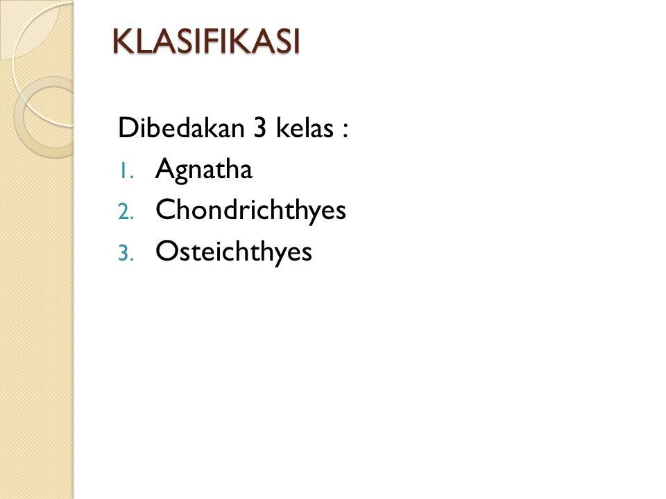 KLASIFIKASI Dibedakan 3 kelas : 1. Agnatha 2. Chondrichthyes 3. Osteichthyes