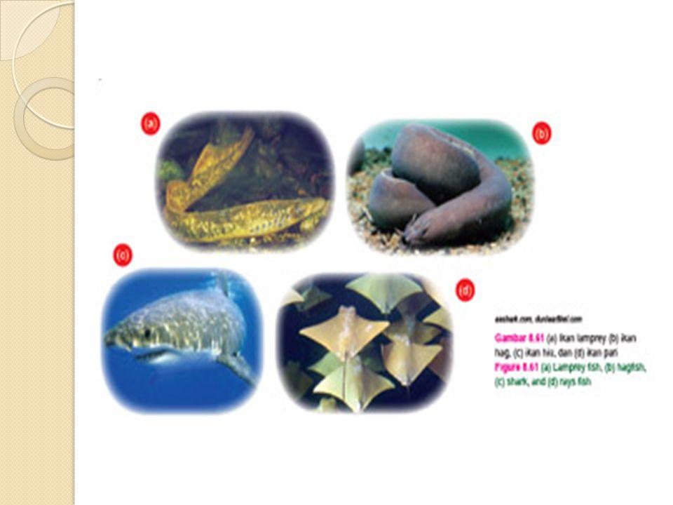 AMPHIBIA Ciri-ciri: Kulit berlendir, tidak bersisik, dan memiliki zat warna (kromatofora).