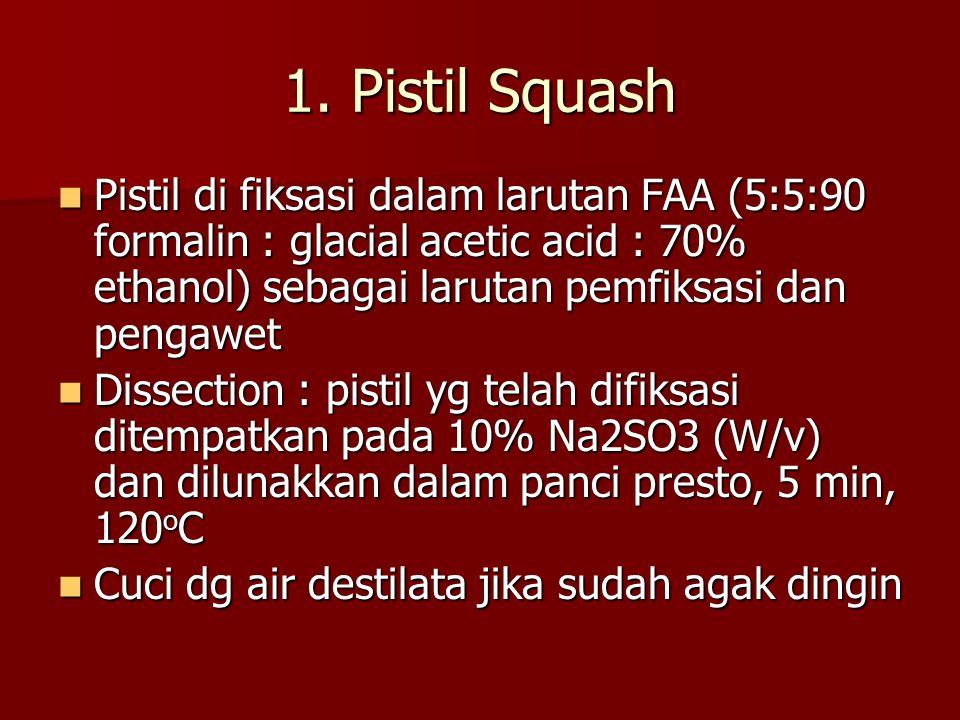 Lanjutan pistil squash Pistil direndam semalam pada suhu 4 o C, dalam 0.1% w/v aniline blue, penghilang warna 0.1M K 3 PO 4.H 2 O.