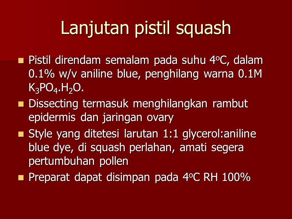 Lanjutan pistil squash Pistil direndam semalam pada suhu 4 o C, dalam 0.1% w/v aniline blue, penghilang warna 0.1M K 3 PO 4.H 2 O. Pistil direndam sem