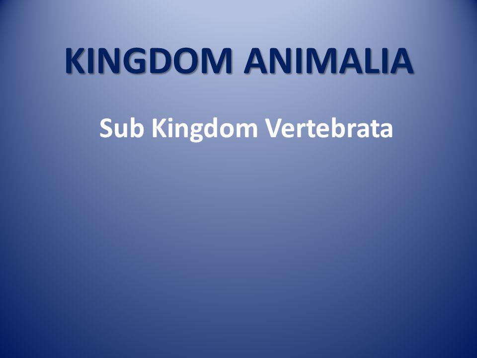 KINGDOM ANIMALIA Sub Kingdom VERTEBRATA Sub Kingdom AVERTEBRATA