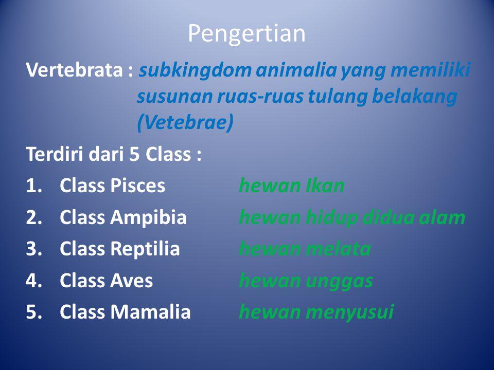 Ciri-ciri Class Pisces Alat gerak : Alat gerak berupa sirip, yaitu sirip punggung, sirip dada, sirip perut, sirip ekor.