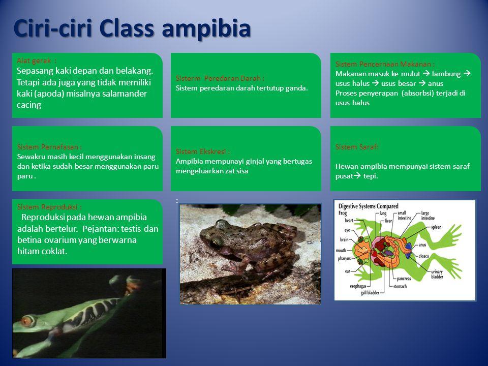 Ciri-ciri Class reptilia Alat gerak : Reptil mempunyai alat gerak berupa jari dengan cakar yang kuat.