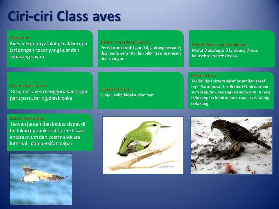 Ciri-ciri Class mamalia Alat gerak : Sepasang anggota gerak atas (tangan), dan sepasang anggota gerak bawah (kaki).