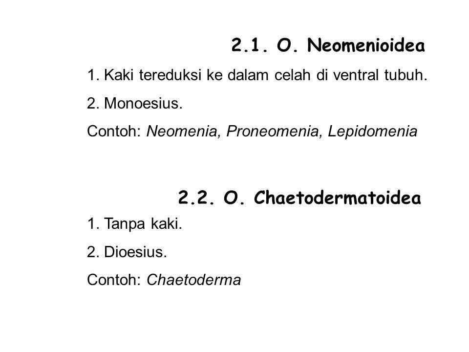 2.1.O. Neomenioidea 1. Kaki tereduksi ke dalam celah di ventral tubuh.