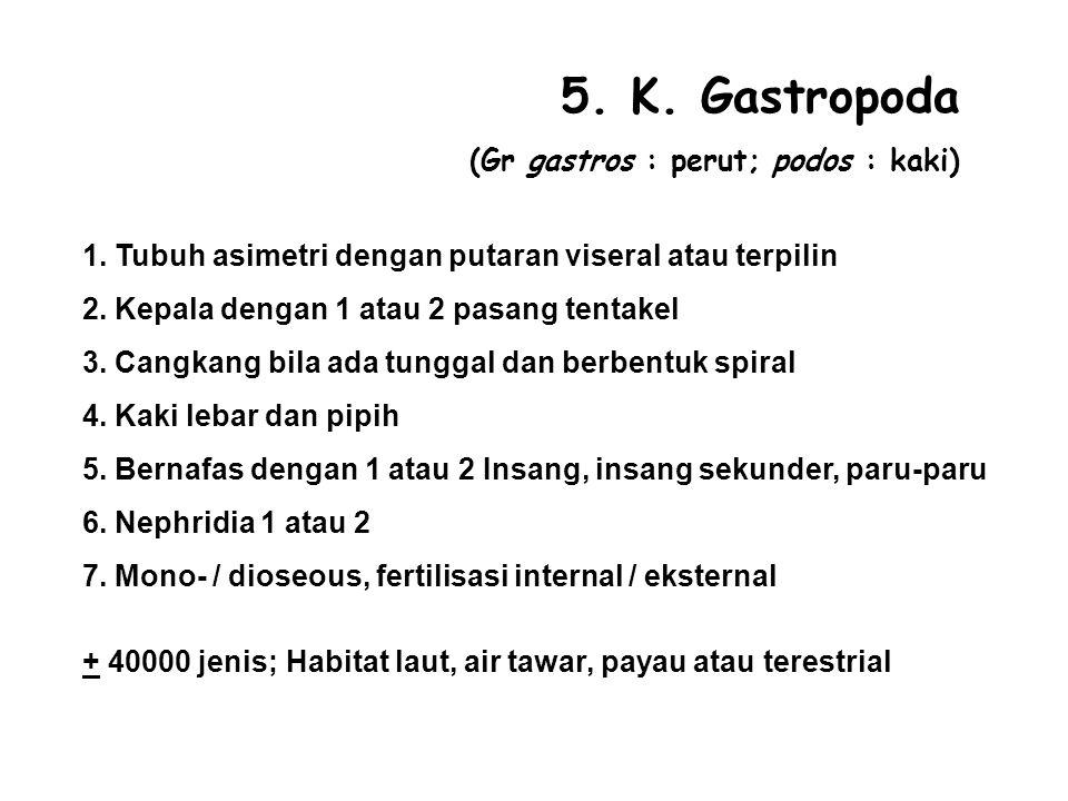 5.K. Gastropoda (Gr gastros : perut; podos : kaki) 1.
