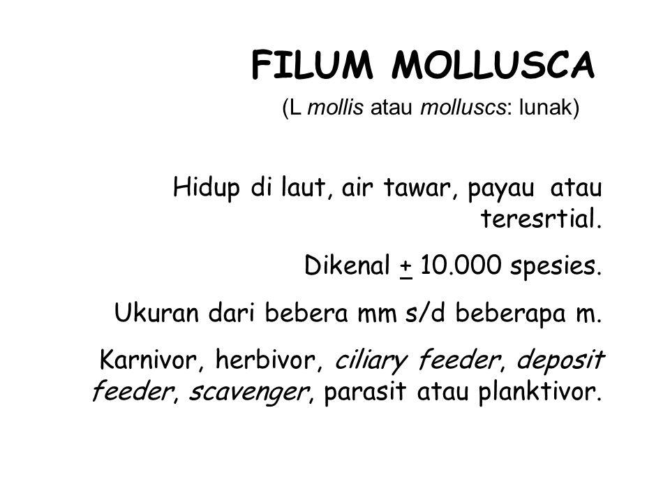 (L mollis atau molluscs: lunak) FILUM MOLLUSCA Hidup di laut, air tawar, payau atau teresrtial.