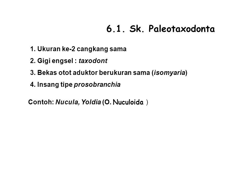 6.1.Sk. Paleotaxodonta 1. Ukuran ke-2 cangkang sama 2.