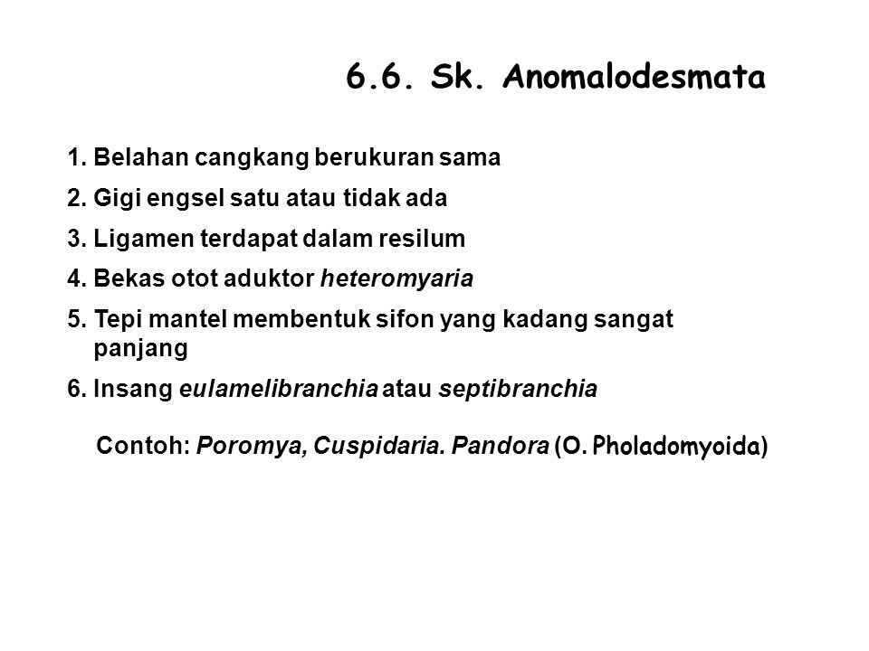 6.6.Sk. Anomalodesmata 1. Belahan cangkang berukuran sama 2.