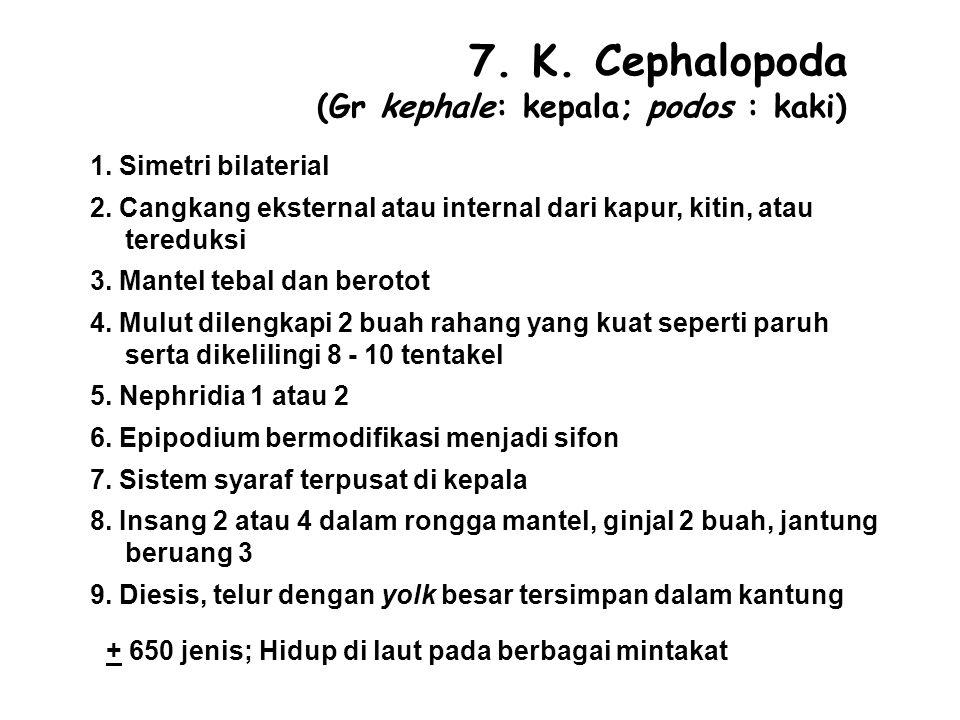 7.K. Cephalopoda (Gr kephale: kepala; podos : kaki) 1.