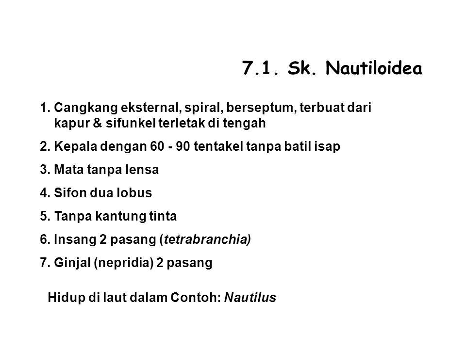 7.1.Sk. Nautiloidea 1.