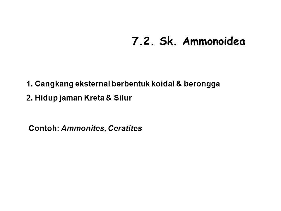 7.2.Sk. Ammonoidea 1. Cangkang eksternal berbentuk koidal & berongga 2.