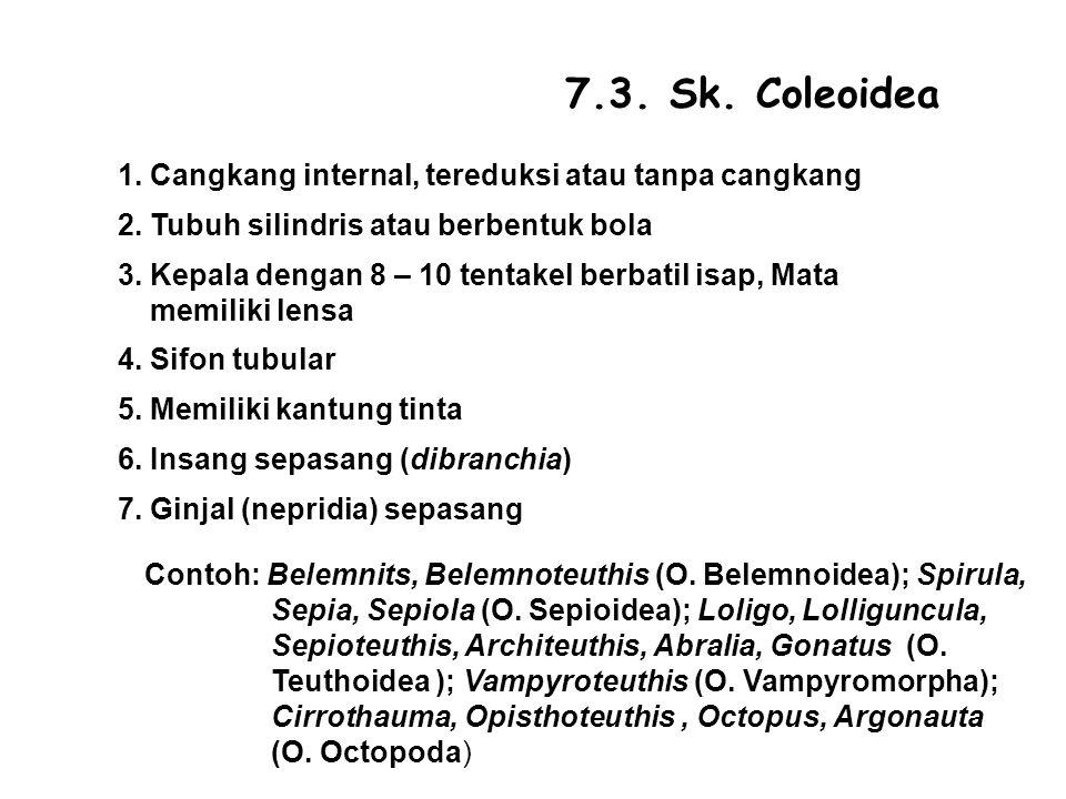 7.3.Sk. Coleoidea 1. Cangkang internal, tereduksi atau tanpa cangkang 2.