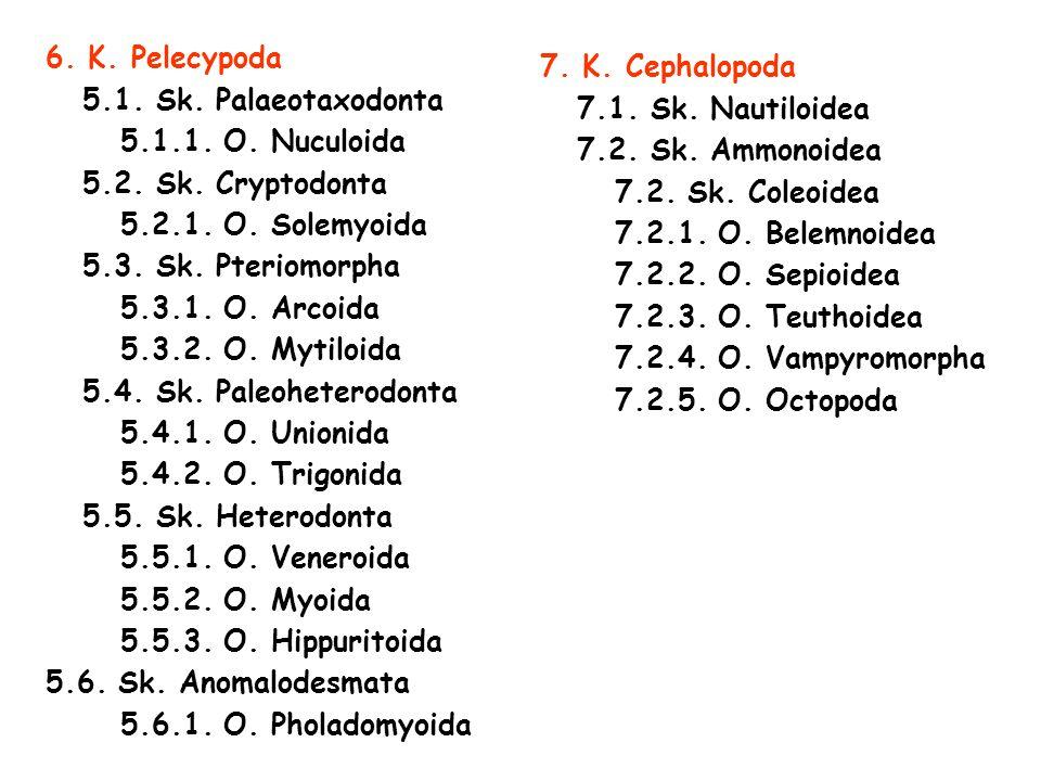6.K. Pelecypoda 5.1. Sk. Palaeotaxodonta 5.1.1. O.