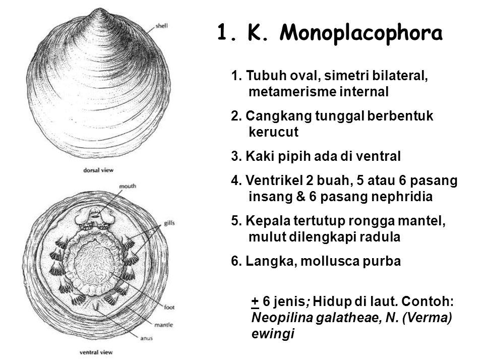 1.K. Monoplacophora 1. Tubuh oval, simetri bilateral, metamerisme internal 2.