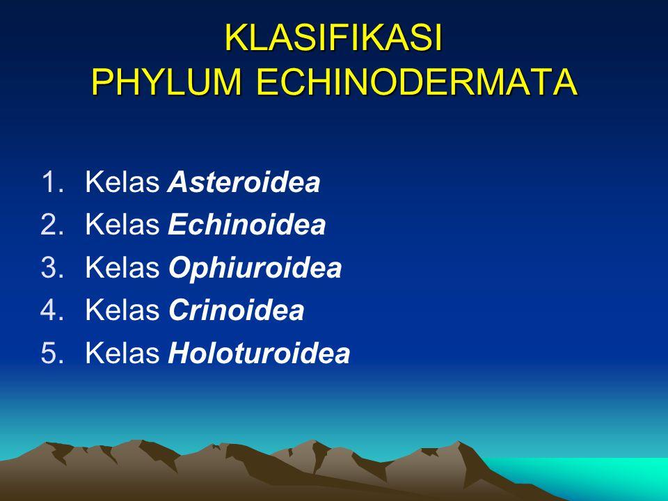 KLASIFIKASI PHYLUM ECHINODERMATA 1.Kelas Asteroidea 2.Kelas Echinoidea 3.Kelas Ophiuroidea 4.Kelas Crinoidea 5.Kelas Holoturoidea