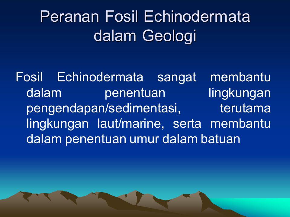 Peranan Fosil Echinodermata dalam Geologi Fosil Echinodermata sangat membantu dalam penentuan lingkungan pengendapan/sedimentasi, terutama lingkungan