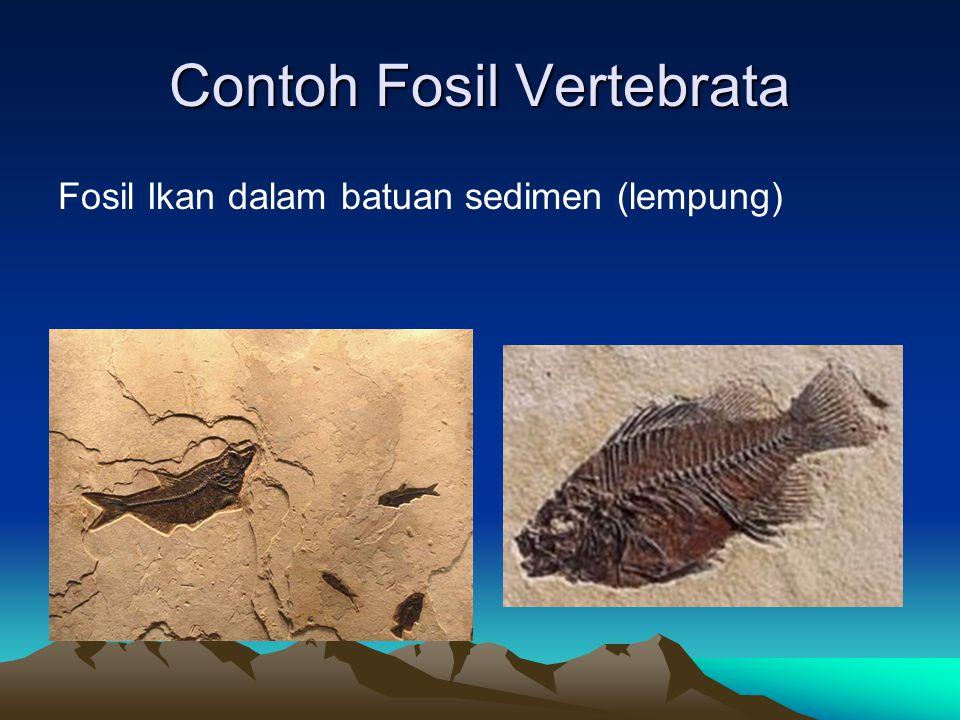 Contoh Fosil Vertebrata Fosil Ikan dalam batuan sedimen (lempung)