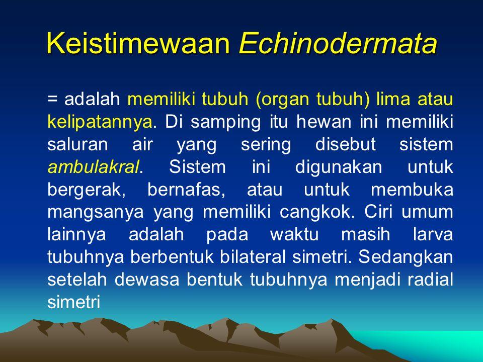 Keistimewaan Echinodermata = adalah memiliki tubuh (organ tubuh) lima atau kelipatannya. Di samping itu hewan ini memiliki saluran air yang sering dis